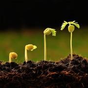 0711_growth-800x480